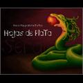 Thumbnail for Hojas de plata