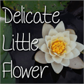 Illustration of font Mf Delicate Little Flower