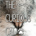 Illustration of font The Curious Cat