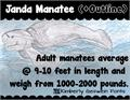 Illustration of font Janda Manatee