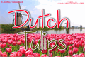 Illustration of font Dutch Tulips Demo