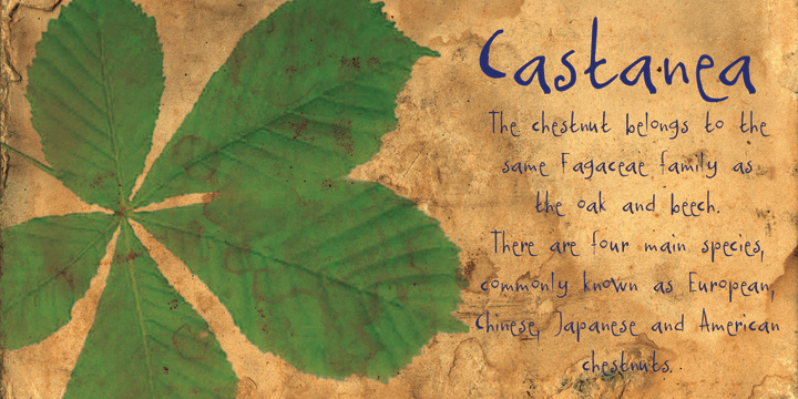Image for DK Castanea font