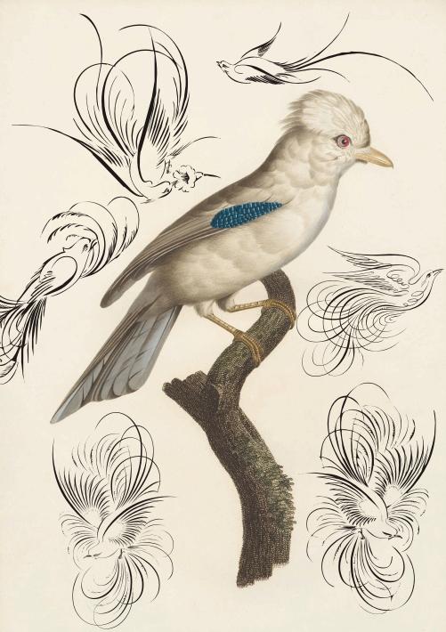 Image for Penmanship Birds Free font