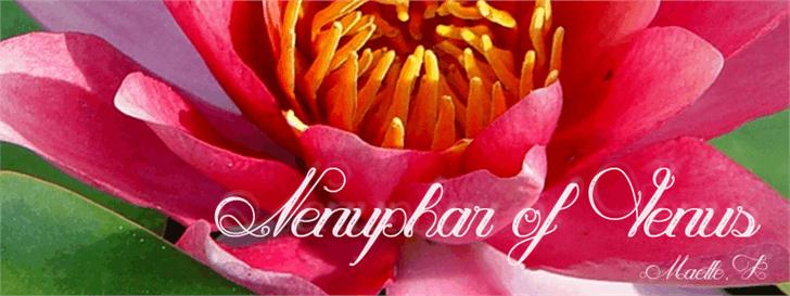 Image for Nenuphar of Venus font