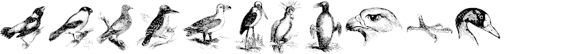 Preview image for birds a Font