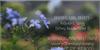 AleFont flower plant