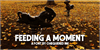 Feeding a Moment Font ground outdoor