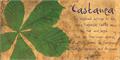 Illustration of font DK Castanea
