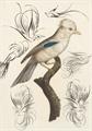 Illustration of font Penmanship Birds Free