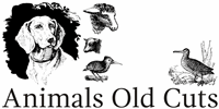 Sample image of Animals Old Cuts font by Intellecta Design