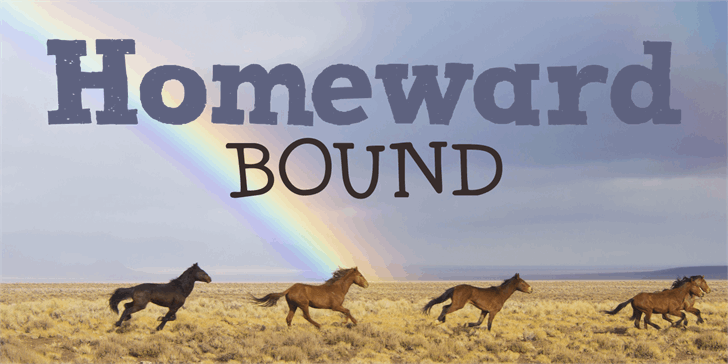 DK Homeward Bound II font by David Kerkhoff
