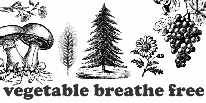 Vegetable Breathe Free font by Intellecta Design