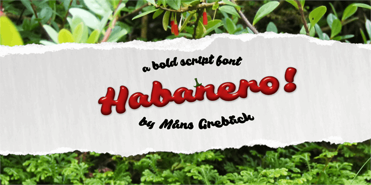 Habanero PERSONAL USE ONLY font by Måns Grebäck