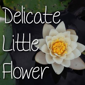 Mf Delicate Little Flower font by Misti's Fonts