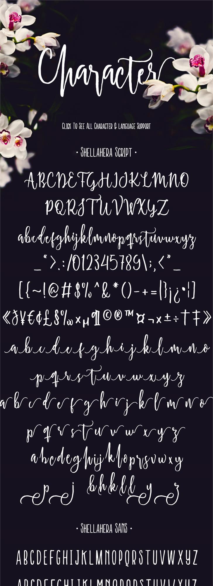 Shellahera Script Demo Font handwriting text