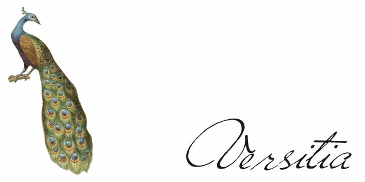 Versitia Font sketch drawing