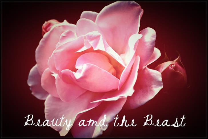 BeautyandtheBeast Font plant hybrid tea rose