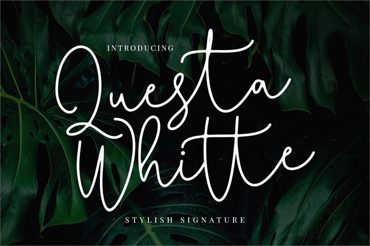 Questa Whitte Font handwriting typography