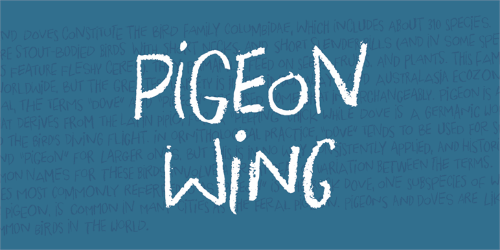 Pigeon Wing DEMO Font handwriting text