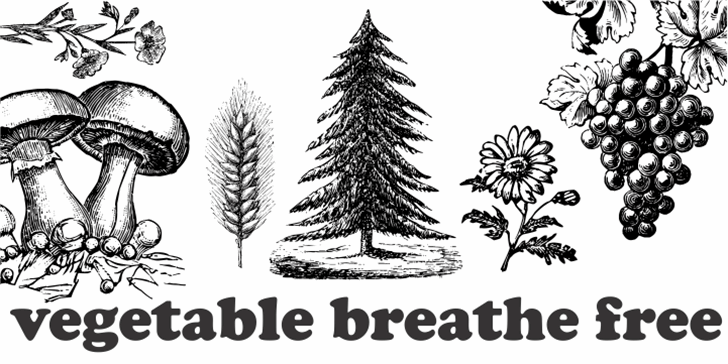 Vegetable Breathe Free Font christmas tree conifer