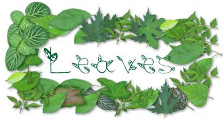 leaves font by Fontilizer