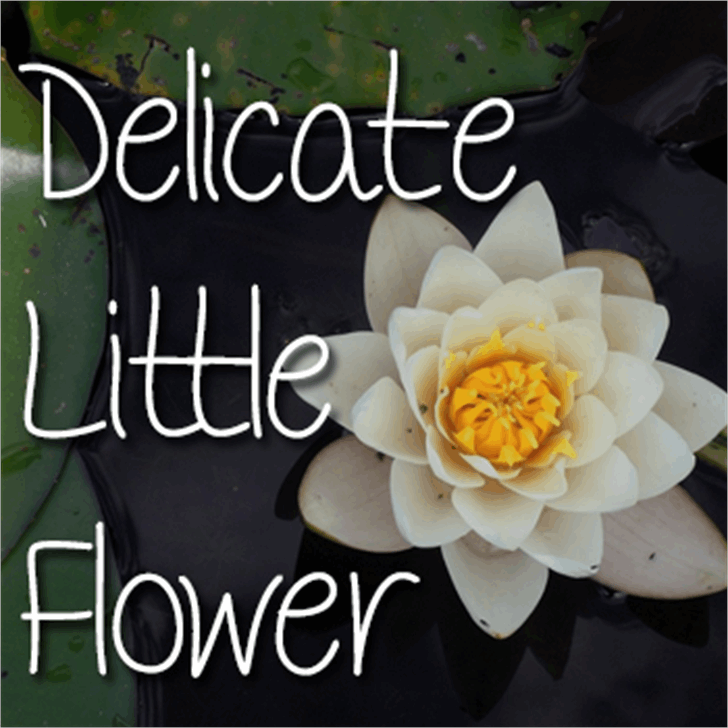 Mf Delicate Little Flower font by Misti's Fonts