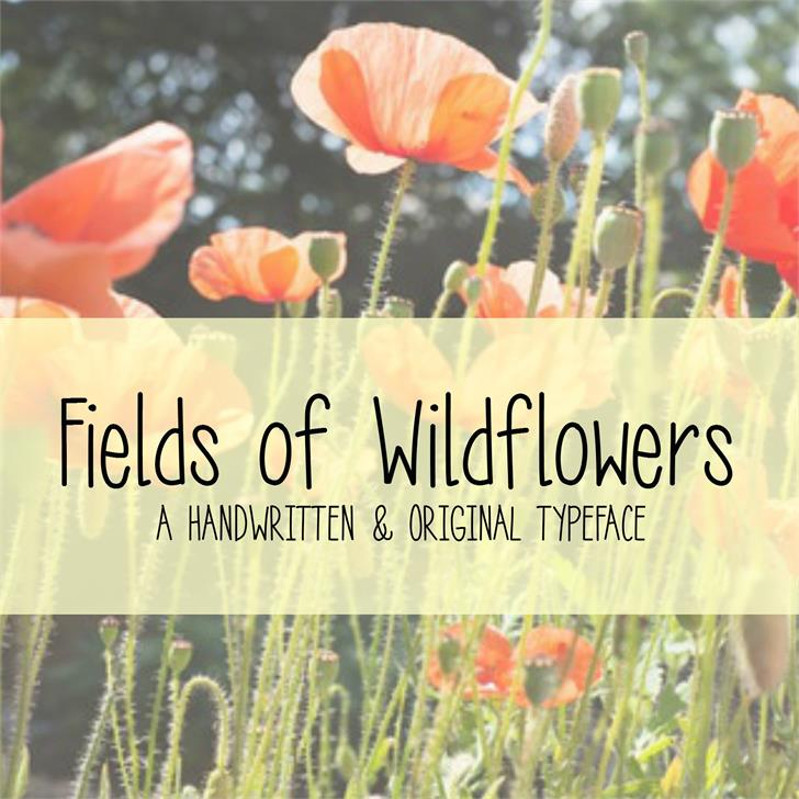 MRF Fields of Wildflowers Font poppy plant