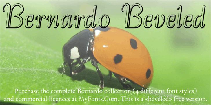 Bernardo Beveled Font insect invertebrate