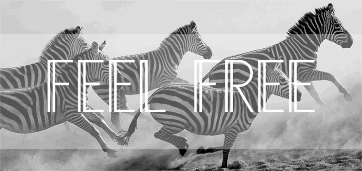 AnniversDemo Font zebra animal