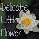 Thumbnail for Mf Delicate Little Flower
